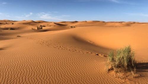 3. Resiliência — O Papel dos Desertos